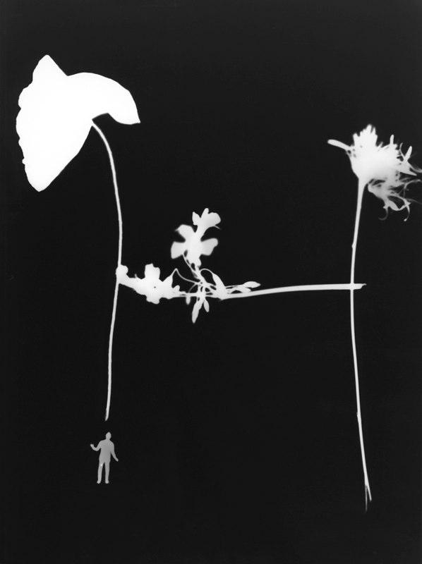 Photogramme abécédaire