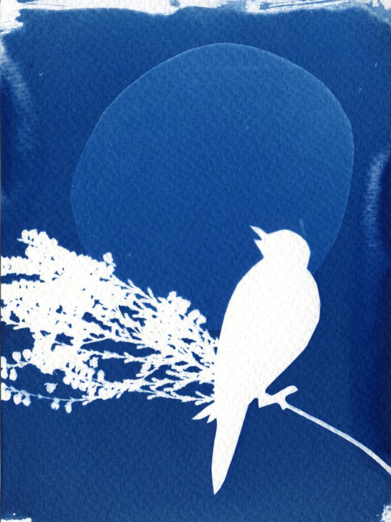 Atelier Cyanotype / collage